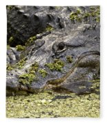 American Alligator Print Fleece Blanket