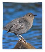 American Dipper Cinclus Mexicanus Fleece Blanket