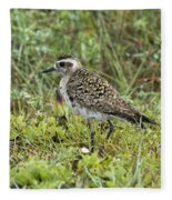 American Golden Plover Fleece Blanket