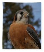 American Kestrel 4 Fleece Blanket