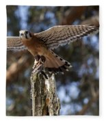 American Kestrel Fleece Blanket