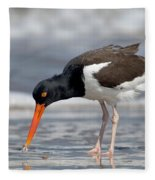 American Oystercatcher Feeding On Clam Fleece Blanket
