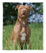 American Pit Bull Terrier Fleece Blanket