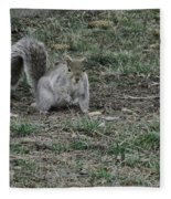 Gray Squirrel Among The Pine Cones Fleece Blanket