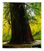 Ancient Old Growth Fleece Blanket