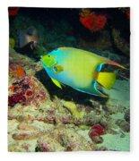 Angel Fish Fleece Blanket