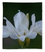 Angel Wings Iris Fleece Blanket