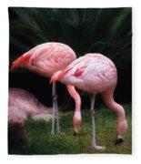 Animal - Flamingo - A Set Of Flamingoes Fleece Blanket