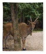 Antelope Behind A Tree Fleece Blanket