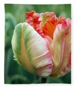 Apricot Parrot Tulip Fleece Blanket