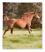Arabian Horse Running Free Fleece Blanket