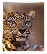Arabian Leopard Panthera Pardus 1 Fleece Blanket