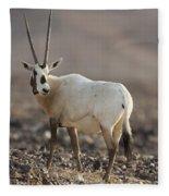 Arabian Oryx Oryx Leucoryx Fleece Blanket