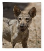 Arabian Wolf Canis Lupus Arabs Fleece Blanket