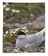 Arctic Tern In Its Nest Fleece Blanket