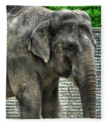 Asian Elephant  0a Fleece Blanket