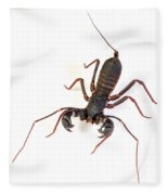 Asian Whipscorpion Fleece Blanket