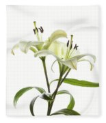 Asiatic Lily Flowers Against White Fleece Blanket