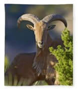 Auodad Ram On Watch Fleece Blanket