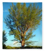 Australian Pine At Sundown Fleece Blanket