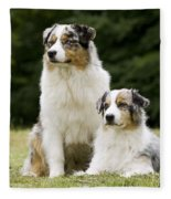 Australian Shepherd Dogs Fleece Blanket