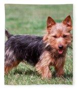 Australian Terrier Dog Fleece Blanket