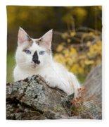 Autumn Cat Fleece Blanket