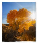 Autumn Golden Birch Tree In The Sun Fine Art Photograph Print Fleece Blanket