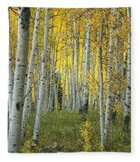 Autumn In The Aspen Grove Fleece Blanket