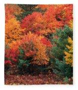 Autumn Maple Trees Fleece Blanket