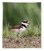 Baby - Bird - Killdeer Fleece Blanket