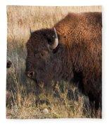 Baby Bison Meets Daddy Fleece Blanket