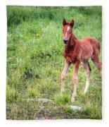 Baby Colt Fleece Blanket