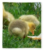 Baby Geese-mayer Lake-savannah Fleece Blanket