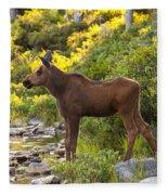 Baby Moose Baxter State Park Fleece Blanket