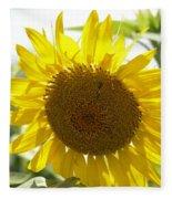 Backlit Sunflower Fleece Blanket