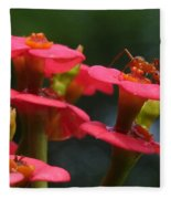 Backyard Beauties Fleece Blanket