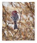 Backyard Birds Male House Finch Fleece Blanket
