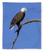 Bald Eagle 4 Fleece Blanket