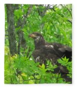 Bald Eagle In A Tree  Fleece Blanket