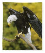 Bald Eagle In Perch Wildlife Rescue Fleece Blanket
