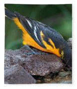 Baltimore Oriole Drinking Fleece Blanket