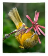 Baltimore Oriole Feeding On Coral Bean Fleece Blanket