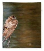 Bank Swallow Resting Fleece Blanket