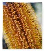 Banksia Flower Fleece Blanket