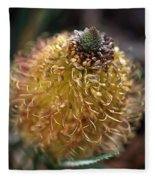 Banksia  Fleece Blanket