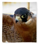 Barbary Falcon Wings Stretched Fleece Blanket