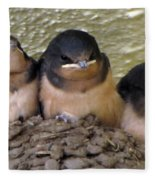 Barn Swallows 1 Fleece Blanket