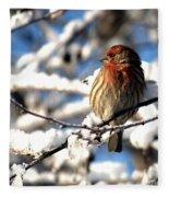Basking In Winter Light Fleece Blanket