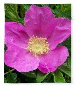 Pink Beach Rose Fully In Bloom Fleece Blanket